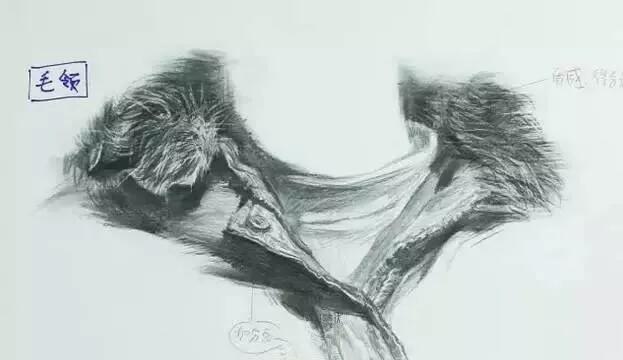 重庆美术培训画室教你衣领怎么画?不同材质衣领刻画方法都有!