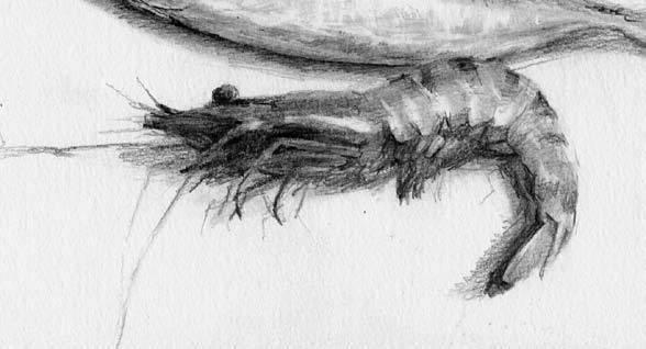 重庆美术培训画室教你素描静物中质感的表现,一学就会!