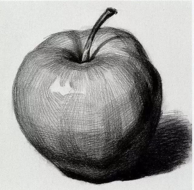 【重庆美术集训画室基础教学】   苹果梨子形体、步骤解析!